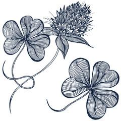 Drawing clover flower