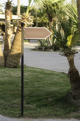Arrow direction among tropical trees.