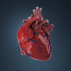 3d rendered human heart.