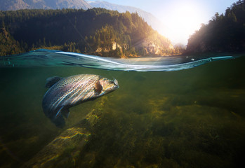 Poster Peche Fishing. Close-up shut of a fish hook under water