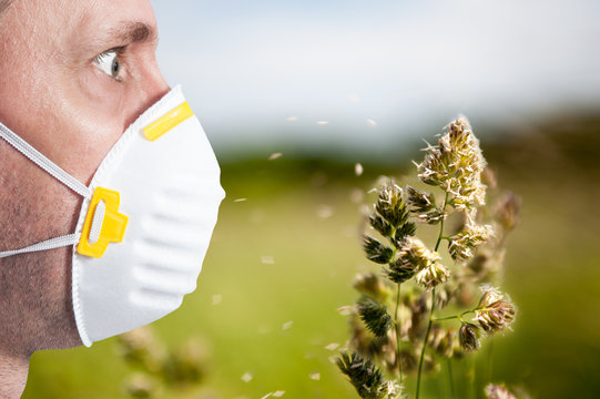 allergy season / Flowering grasses that are the cause of many allergies