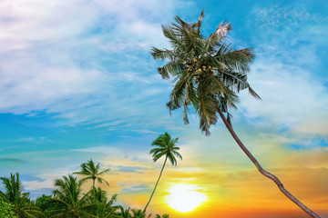 beautiful sunrise and tropical palms