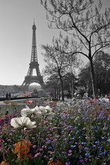 Flowers at Trocadero Square and Eifel Tower, Paris, France