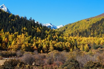 Autumn at Yading Nature Reserve in Daocheng County ,China
