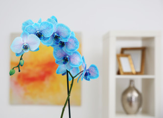 Beautiful blue orchid in interior design