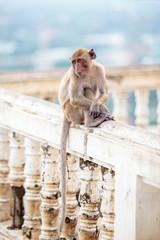 alone monkey.