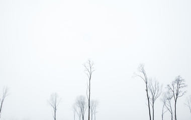 Nature. The winter fog that coated the trees.