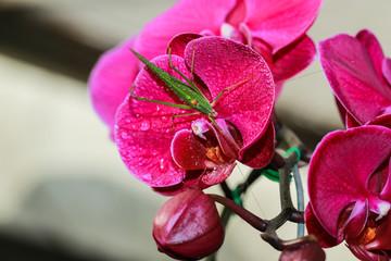 Orchids, vanda,flower,nature,Orchids Thailand