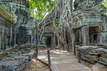 Ruins of the ancient Khmer temple of Ta Prohm.