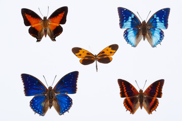 Collection of  five african butterflies isolated on white