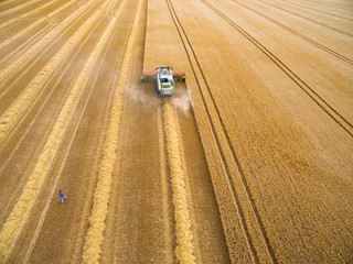 Aerial view of farmer walking toward combine harvester in golden barley field