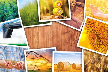 Agriculture themed collage of photos