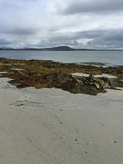 Algen am Strand in Irland