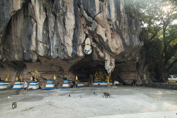 Monkeys in the Buddhist temple