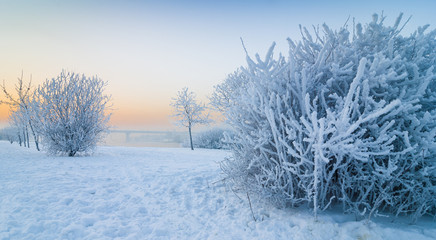 A frosted bush