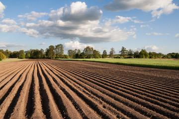 Obraz Widok na zaorane pole w piękny słoneczny dzień na wsi - fototapety do salonu