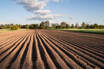 In de dag Platteland Widok na zaorane pole w piękny słoneczny dzień na wsi