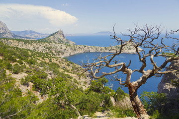 Landscape with a beautiful pine tree on a cliff. View from the mountains to the sea and cape. Crimea, Russia, Europe
