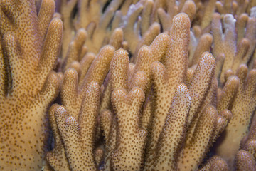 coral close up