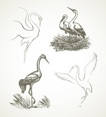 Stork. Vector drawing