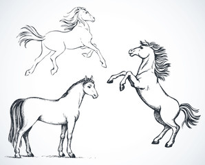 Horses. Vector drawing