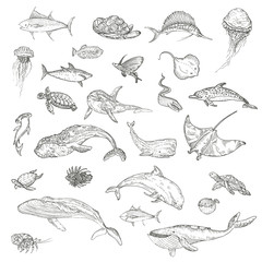 The pattern of marine animals.