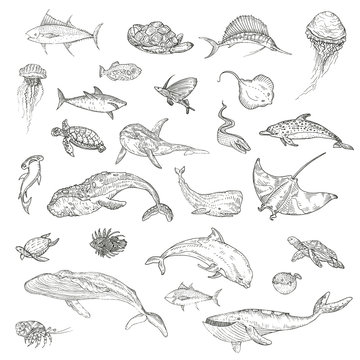 The pattern of marine animals.