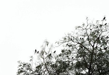 Silhouette of birds on a tree with copyspace