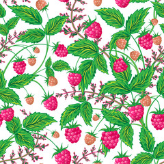 Colored raspberries seamless pattern. Seamless pattern with colored hand draw graphic raspberries. Vector illustration.