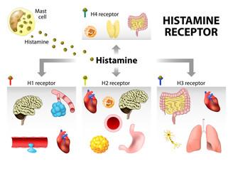 Histamine receptor