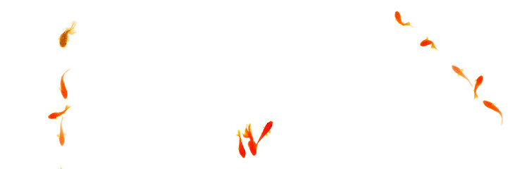 金魚 バナー カード