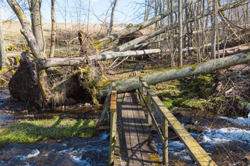 Storm damaged forest by hiking trails