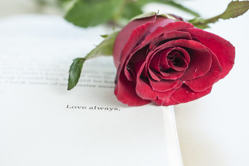 Beautiful Rose on Love stories novel