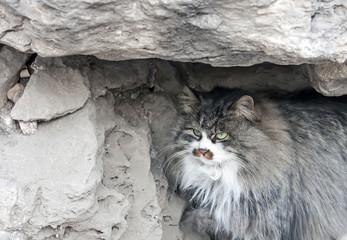 cat hides under rock