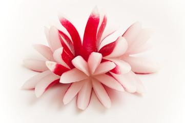radis découpés en forme de fleur