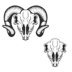 ram skull. vector illustration.