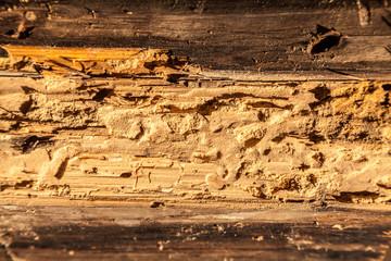 gmbh günstig kaufen gesellschaft kaufen was ist zu beachten Holzschutz firmenanteile gmbh kaufen gmbh gesellschaft kaufen