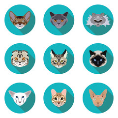 flat icons set of pedigreed cats