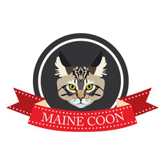 flat icon pedigreed cat maine coon