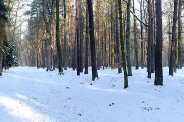 Forest road in winter with snow