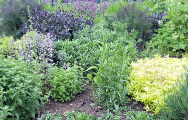 Aromatic herb garden with purple sage, thyme, rosemary, lavender, fennel and pink flowers