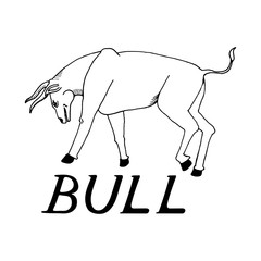 hand draw a bull style sketch