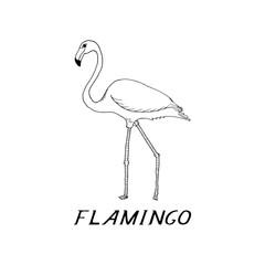 hand draw flamingo style sketch