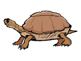 turtle, illustration of wildlife, zoo, wildlife, reptile