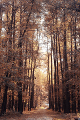 Landscape autumn in a golden forest
