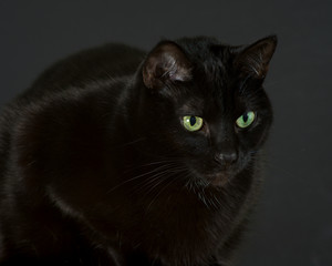 Black cat sitting, looking intensely at something to the right of camera