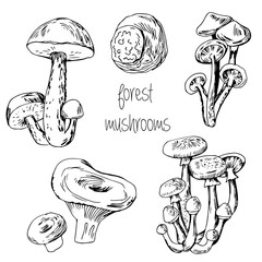 Forest edible mushrooms