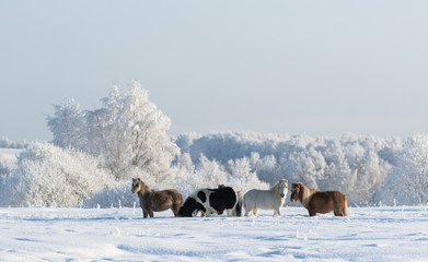 Wall Mural - Winter landscape and four ponies