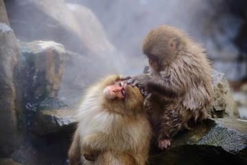 仲良しの猿