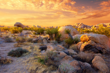 The Rocky Landscape of Joshua Tree National Park, Glowing at Sunset